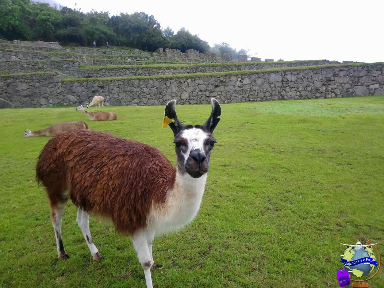 ¿Machu picchu sera gratis? Peru reactivará el turismo