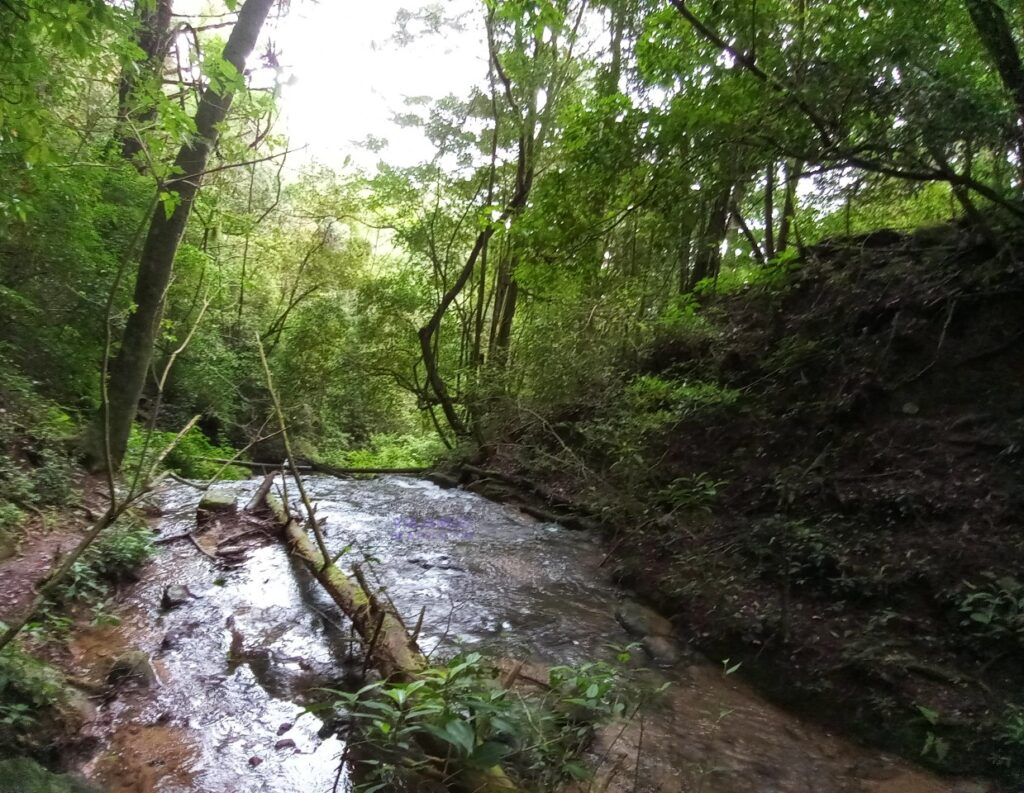 Rio Parque Nacional Montecristo El Salvador