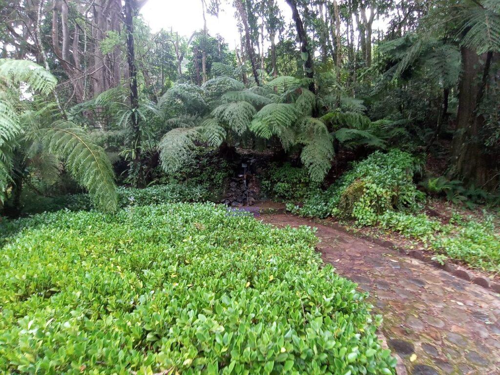 Jardin de los 100 años Montecristo