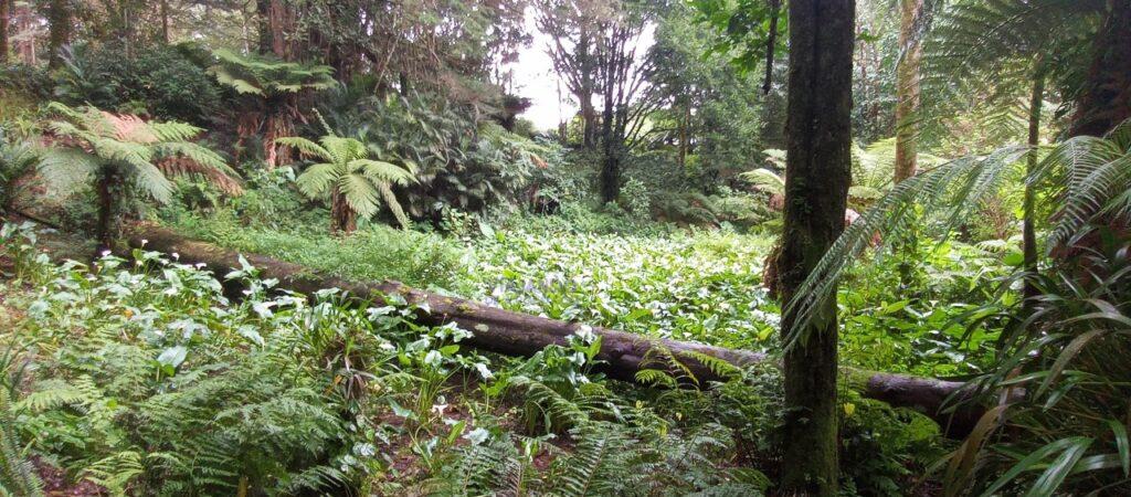 Jardin de los cien años Montecristo El Salvador