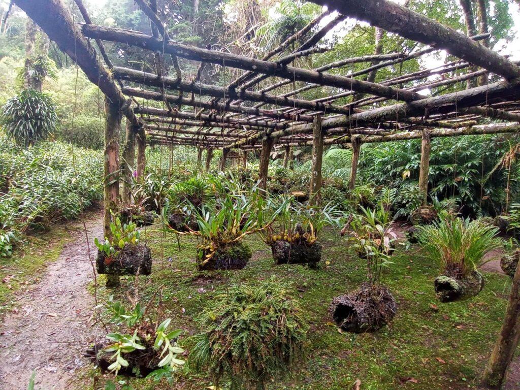 Orquidias Jardin de cien años Montecristo
