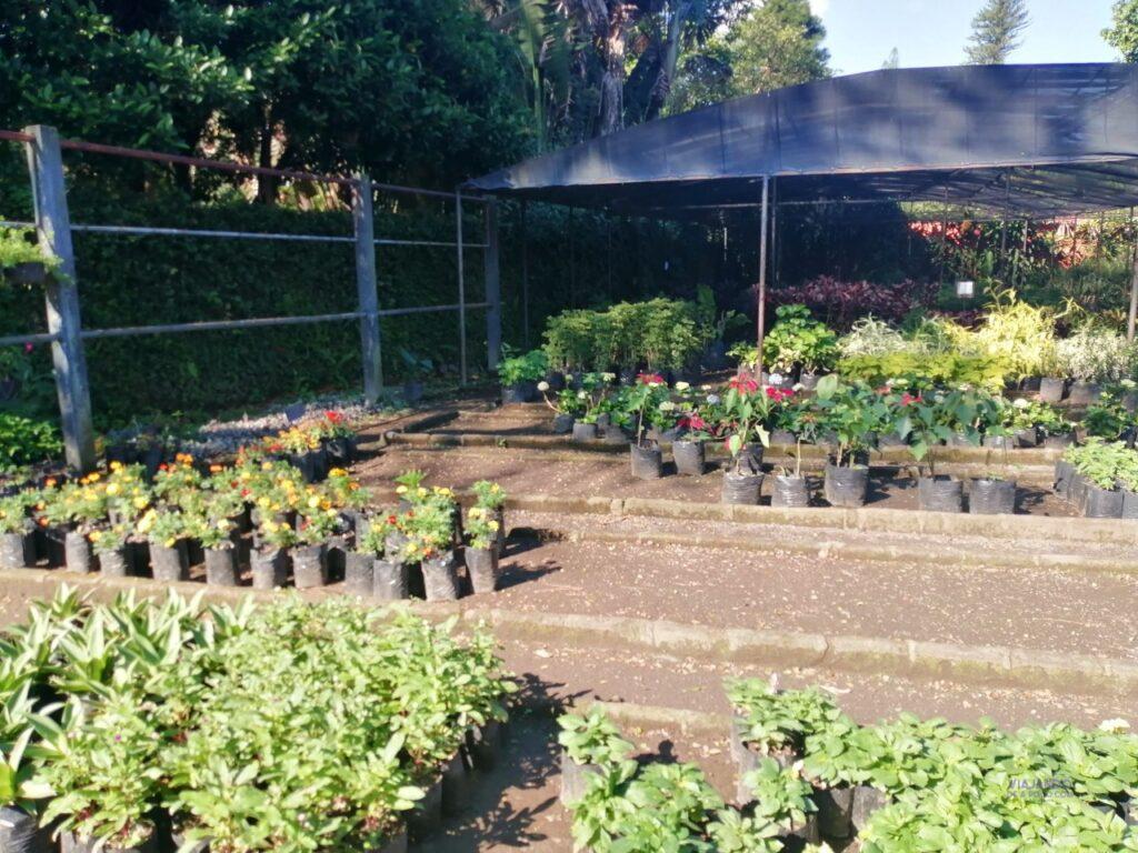 vivero de jardin botanico