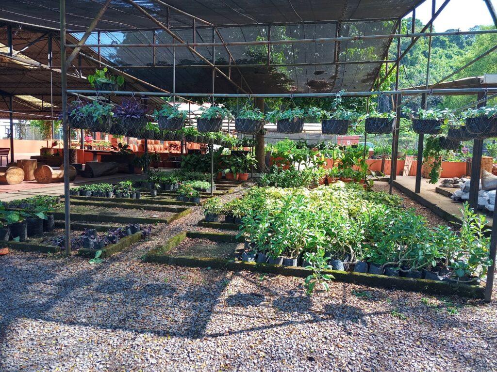 Vivero en Jardin Botanico