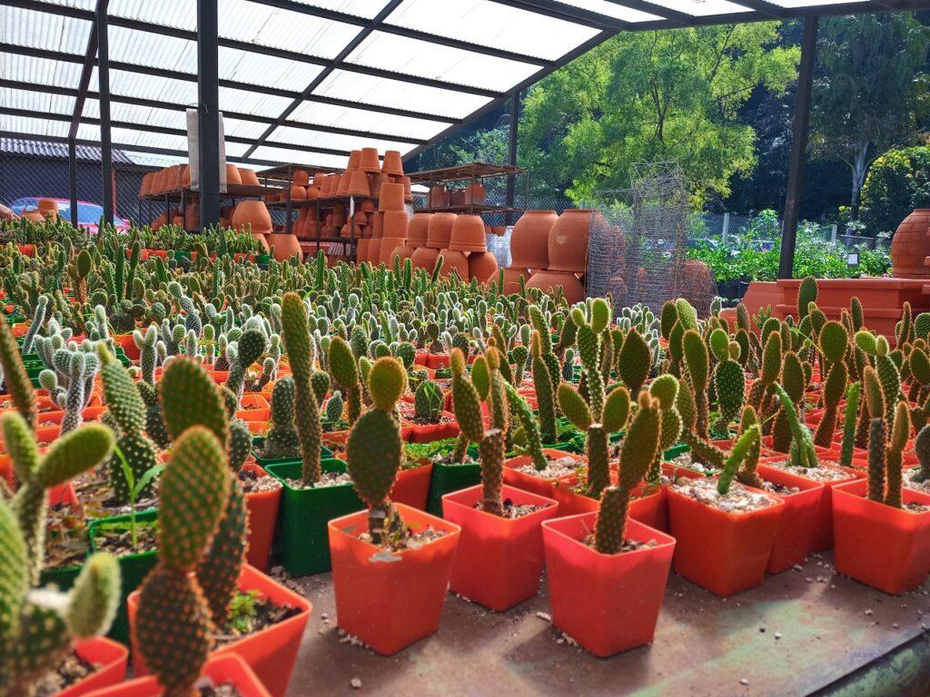 Plantas en vivero de jardin botanico
